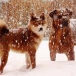 @Trupanion Pet Medical Insurance- Petco $25 gift card GIVEAWAY