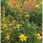 Four Ways to make your Backyard a Certified Wildlife Habitat