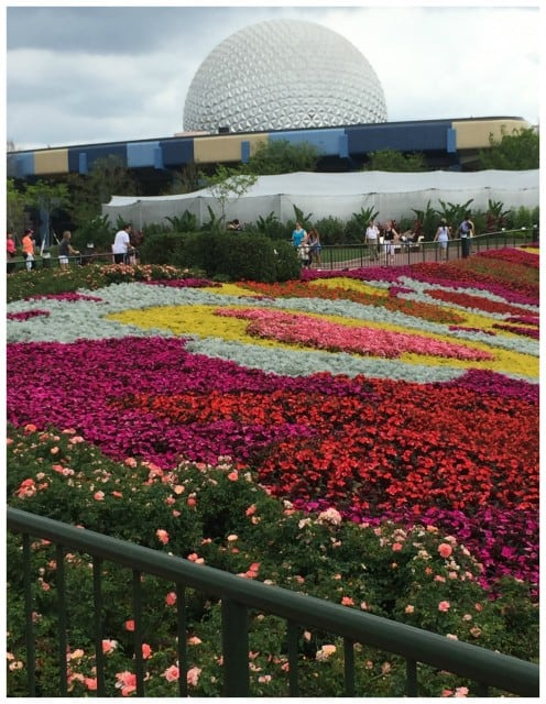 EpcotFlowers