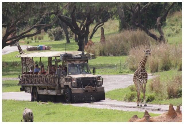 TrekGiraffes