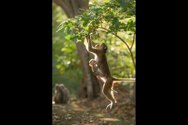 monkeykingdom552f19a5597f5