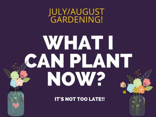 Summer Gardening- Its not too late.  What can I plant now?