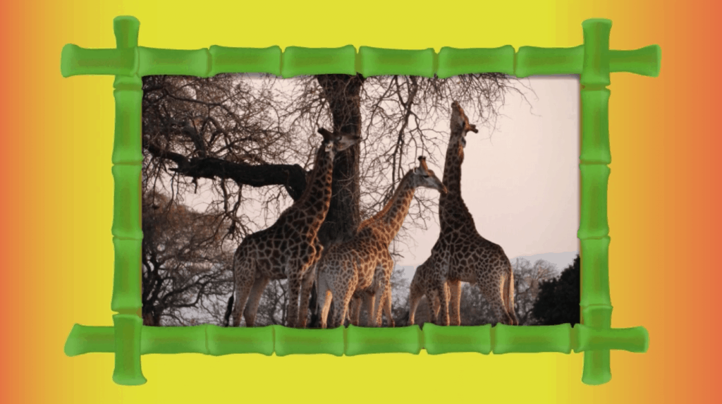 Jungle Jim - A Musical Wildlife Adventure